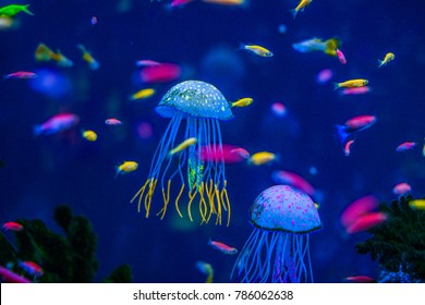 aquarium of jellyfish, fish, seaweed