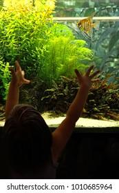 Aquarium and kid. the child looks at the fish in big aquarium.