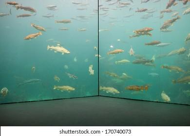 Aquarium with large saltwater tank