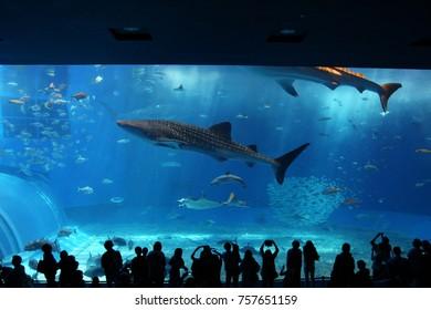 Aquarium large tank
