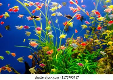 Aquarium with many colored fish
