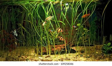aquarium with many fish and natural plants .120 L tank water