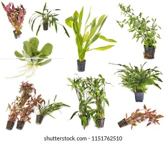 aquarium plants in front of white background