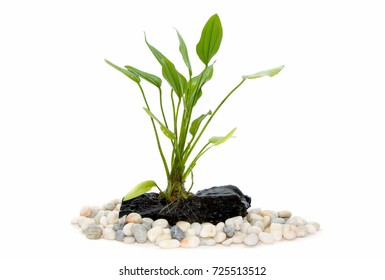 aquarium plants on small driftwood with rocks