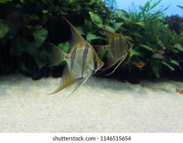 Aquarium Sealife Lisbon