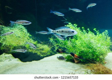 Aquarium with small fishes swimming