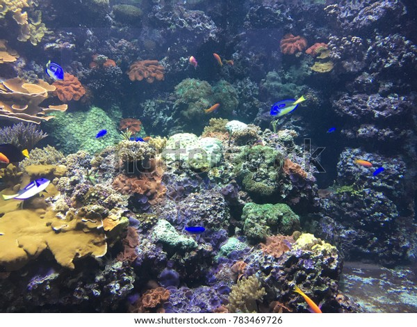 Aquarium with tropical fish and coral