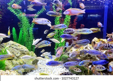 An aquarium with a variety of colorful tropical fish
