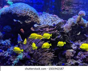Aquarium various sea creatures photos