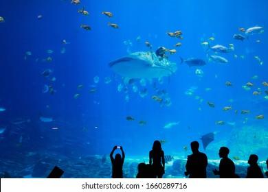 aquarium viewing at a tourist attraction