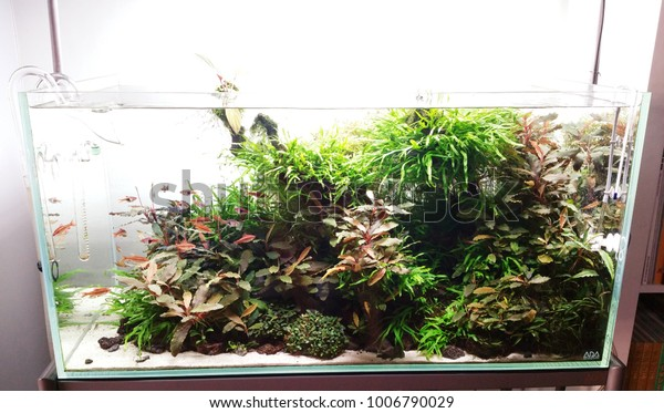 Aquascape Aquarium Set Specialty Store Kuala Stock Photo Edit Now 1006790029