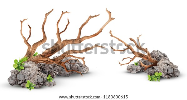 Aquascape Layout Driftwood Setup Water Plant Stock Photo ...
