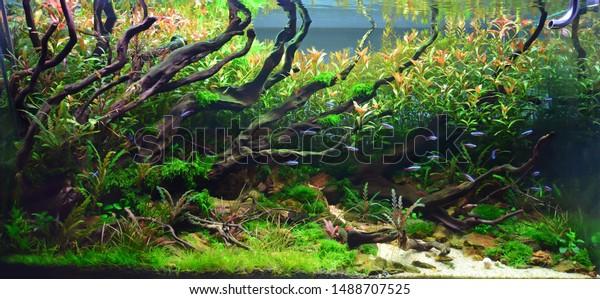 Aquascape Nature Aquarium Plant Fish Tank Stock Photo Edit Now 1488707525