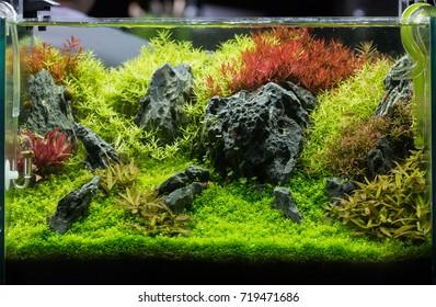 Aquascape With Rock.