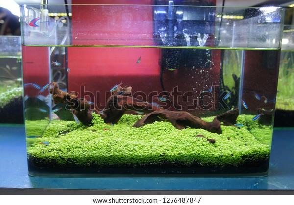 Aquascape Terrarium Design Group Small Fish Stock Photo Edit Now 1256487847