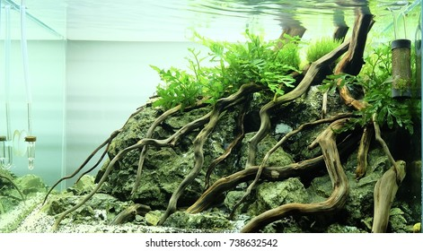 Aquascape With Wood And Rock
