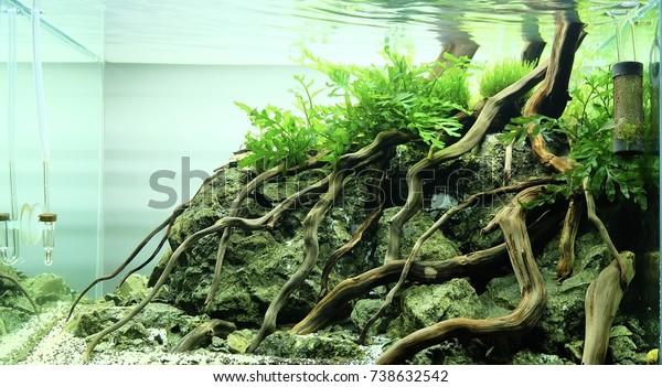 Aquascape Wood Rock Stock Photo Edit Now 738632542
