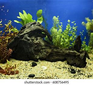 Aquascaping of the beautiful planted tropical freshwater aquarium