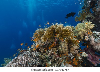 The aquatic life in the Red Sea
