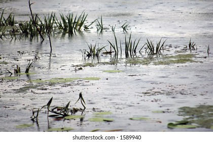 Aquatic plants and grey clouds reflecting in a marshland.