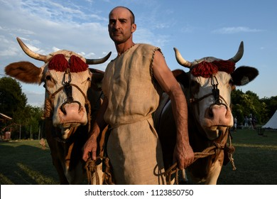 Aquileia, Italy - June 17, 2018: A man in traditional ancient Roman farmer clothes holds two livestock cows during Tempora in Aquileia, ancient Roman historical re-enactment