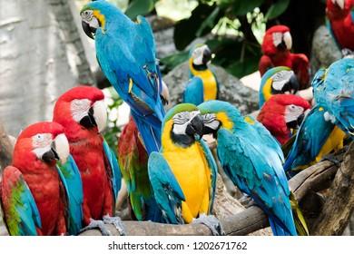Ara ararauna,macaw parrot portrait. Ara macaw parrot