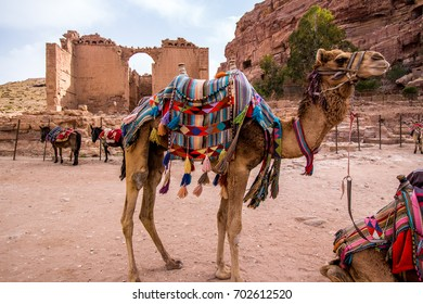 Arab camels among the ruins of the ancient city of Petra, Jordan