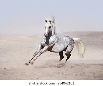 arab horse running in desert