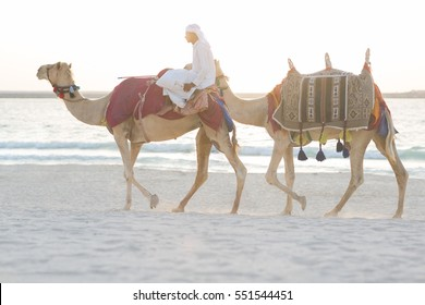 Arab man riding camels on the beach.