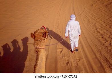 An Arab man in traditional white clothes walk a camel on a leash in the Asian desert, Dubai, United Arab Emirates