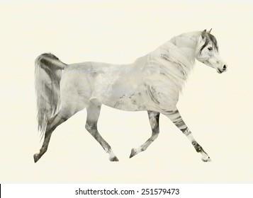 Arabian horse in motion trot, gray  double exposure