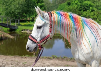 Arabian horse painted in rainbow colors outdoors