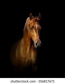 Pure Arabian Horse Images Stock Photos Vectors Shutterstock