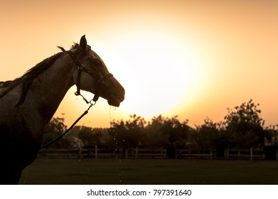 Equestrian for Logo Stock Photos, Images & Photography