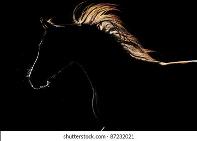 arabian horse silhouette on the dark background