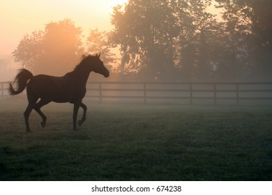 Arabian Horse Trotting in Morning Fog