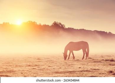 Arabian horses grazing on pasture at sundown in orange sunny beams. Dramatic foggy scene. Carpathians, Ukraine, Europe. Beauty world. Retro style filter. Instagram toning effect.