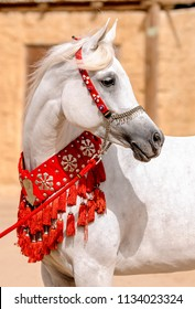 Arabian horses next to old houses