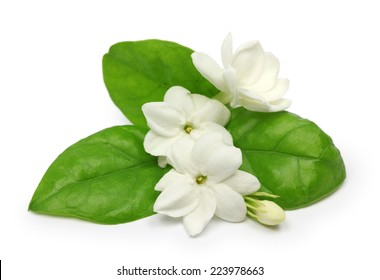 jasmin arabe, jasmina sambac, fleur et feuilles, fleur de thé jasmin isolée sur fond blanc