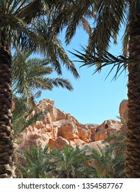 Arabian Landscape with desert and date palms