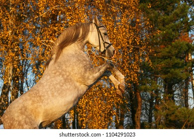Arabian thoroughbred horse in the autumn playing on a yellow background