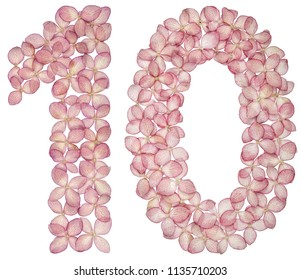 Arabic numeral 10, ten, from flowers of hydrangea, isolated on white background