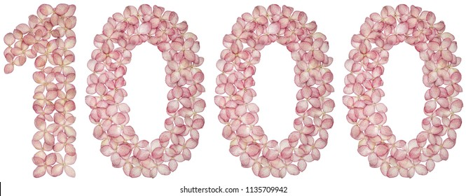 Arabic numeral 1000, one thousand, from flowers of hydrangea, isolated on white background