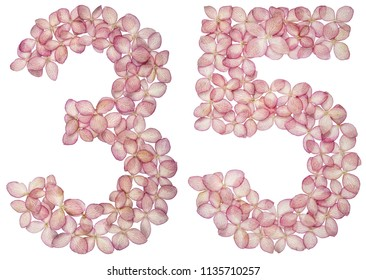 Arabic numeral 35, thirty five, from flowers of hydrangea, isolated on white background