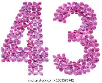 Arabic numeral 43, forty three, from flowers of lilac, isolated on white background