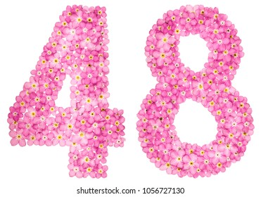 Arabic numeral 48, forty eight, from pink forget-me-not flowers, isolated on white background
