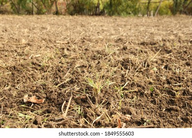 Arable land - land that has been plowed for a short time