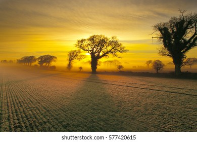 Arable and Oaks on a frosty sunrise  farmland Norfolk winter
