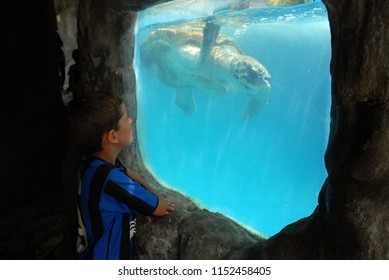 Aracaju, Brazil, July 20, 2015. Child watching the sea turtles in the tank aquarium in the Oceanarium of Aracaju in the state of Sergipe.