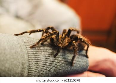 71682297fa Arachnophobia Images, Stock Photos & Vectors | Shutterstock